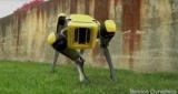 Boston Dynamics показала нового робопса